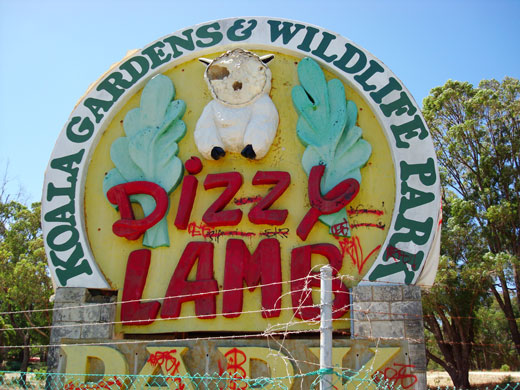dizzy lamb