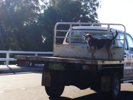 Dog seatbelt from Chubby Zebra